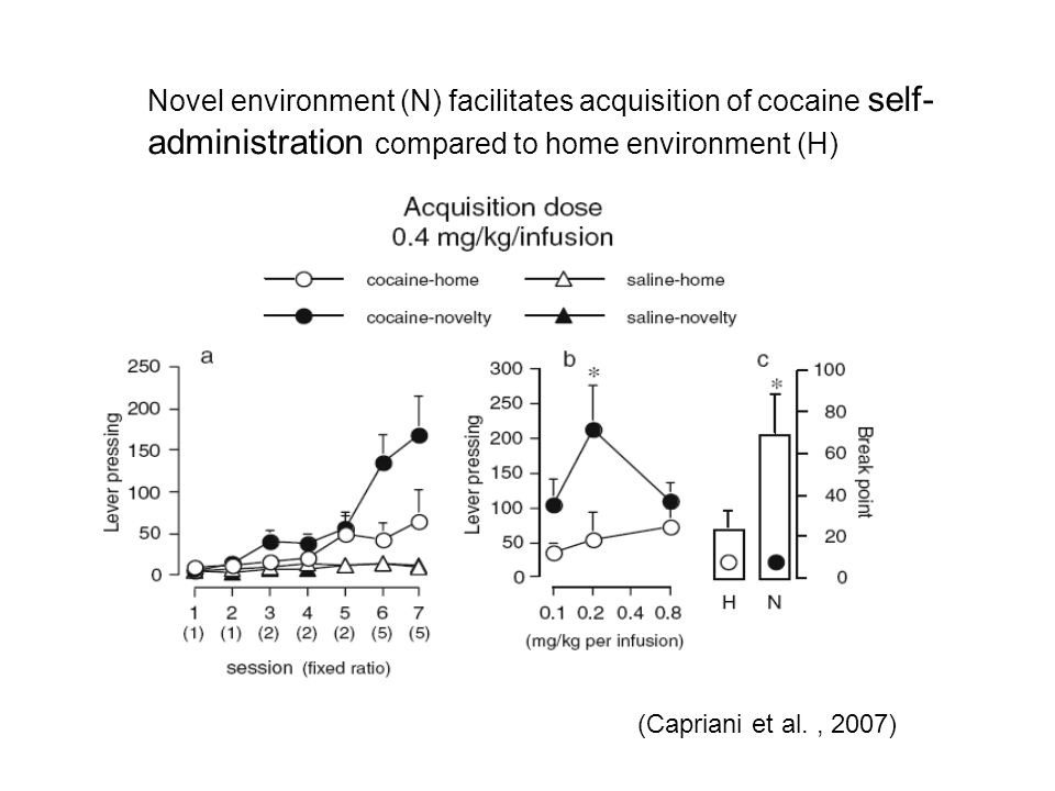 Novel environment (N) facilitates acquisition of cocaine self- administration compared to home environment (H) (Capriani et al., 2007)