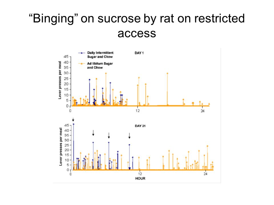 """Binging"" on sucrose by rat on restricted access"