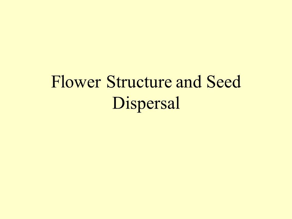Flower Structure and Seed Dispersal