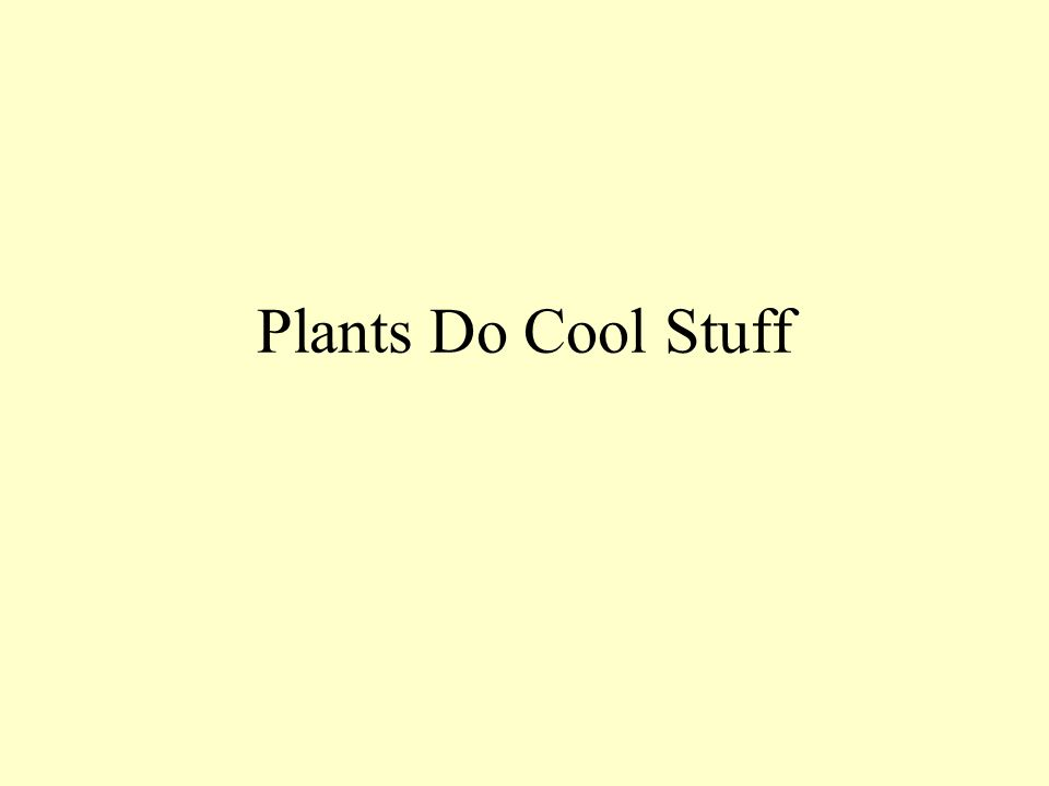 Plants Do Cool Stuff