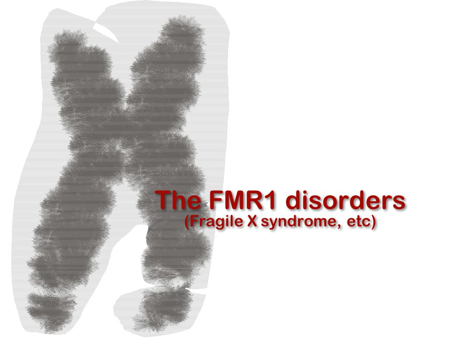 What does FMRP do?