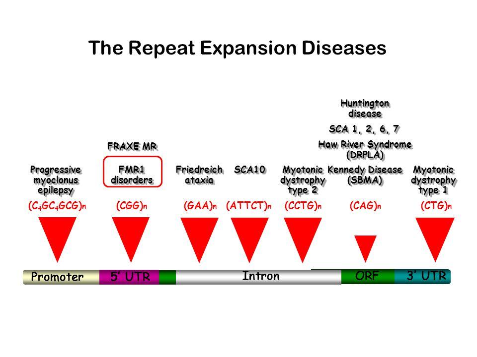 RNAs bound by FMRP FMR1 Glucocorticoid receptor GABA A receptor subunits CAMKIIα MAP1B Rac1 Calbindin Vimentin etc, etc
