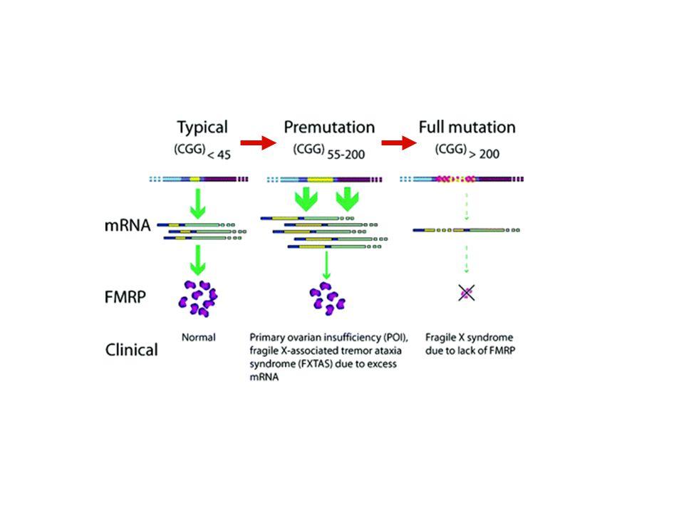 protein product Protein gel - FMRP FMRPI304N
