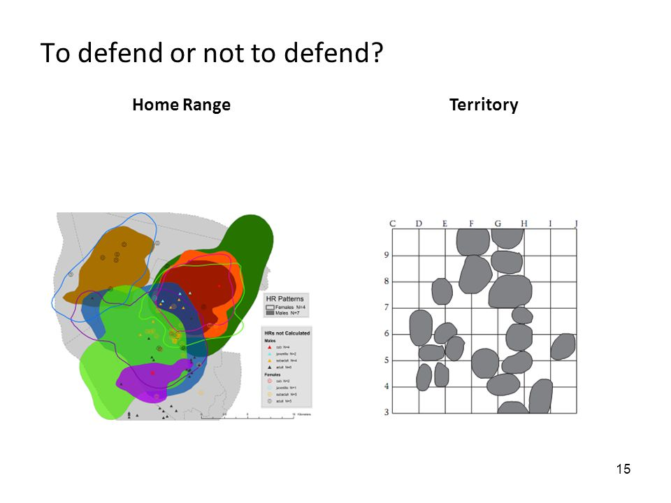 15 To defend or not to defend Home RangeTerritory