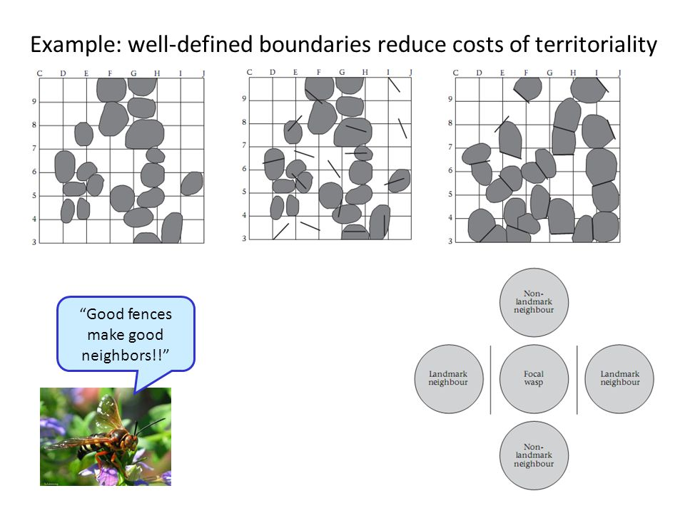 """20 Example: well-defined boundaries reduce costs of territoriality """"Good fences make good neighbors!!"""""""
