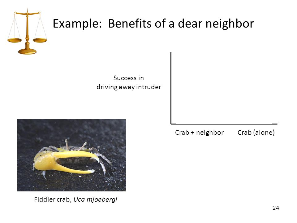 24 Example: Benefits of a dear neighbor Fiddler crab, Uca mjoebergi Crab + neighborCrab (alone) Success in driving away intruder 88%71%