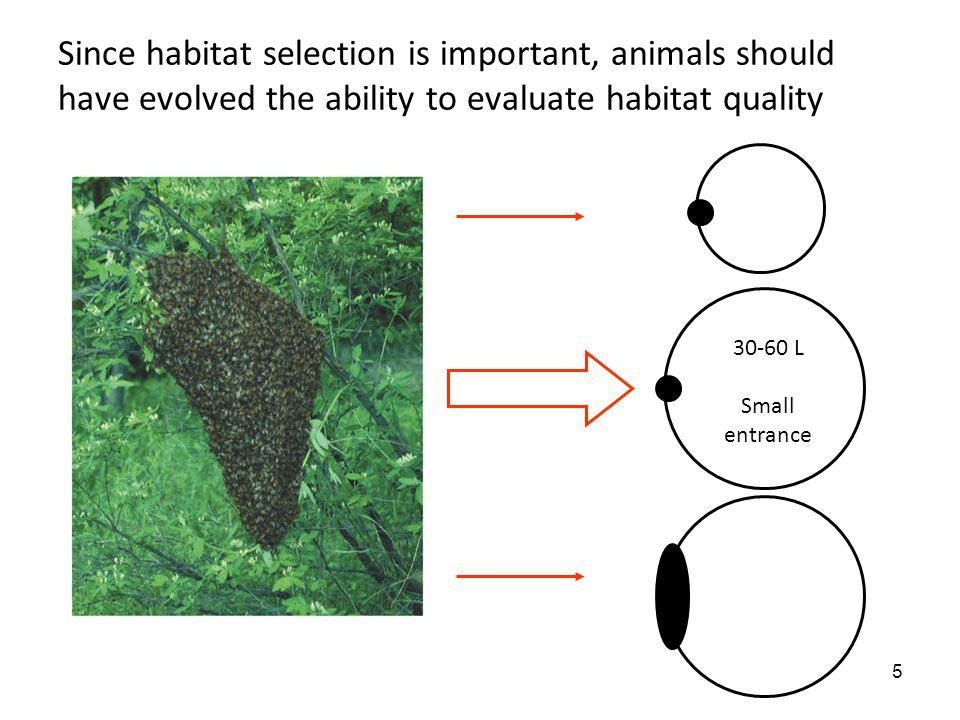 5 Since habitat selection is important, animals should have evolved the ability to evaluate habitat quality 30-60 L Small entrance