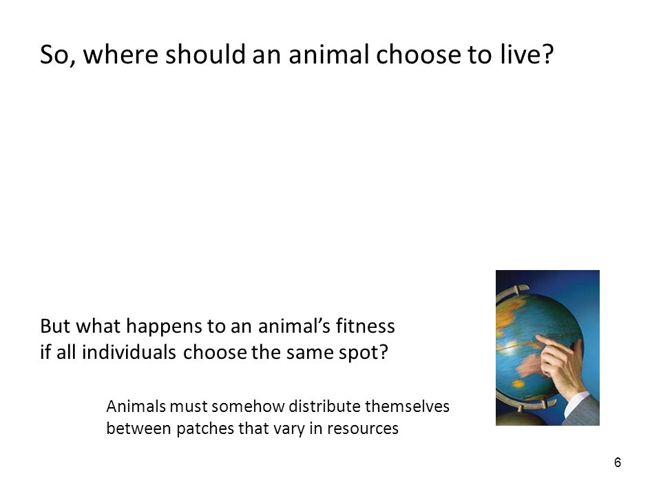 6 So, where should an animal choose to live? But what happens to an animal's fitness if all individuals choose the same spot? Animals must somehow dis
