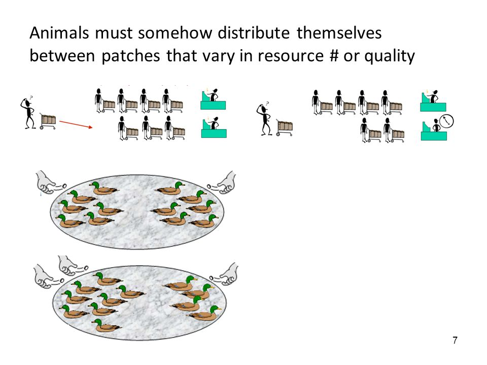 7 Animals must somehow distribute themselves between patches that vary in resource # or quality