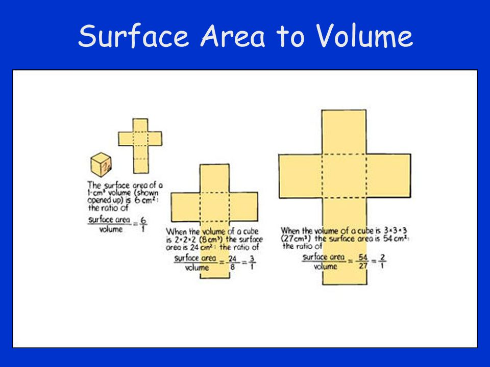 Surface Area to Volume