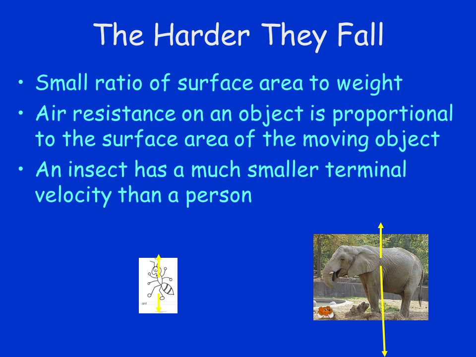 The Harder They Fall Small ratio of surface area to weight Air resistance on an object is proportional to the surface area of the moving object An insect has a much smaller terminal velocity than a person