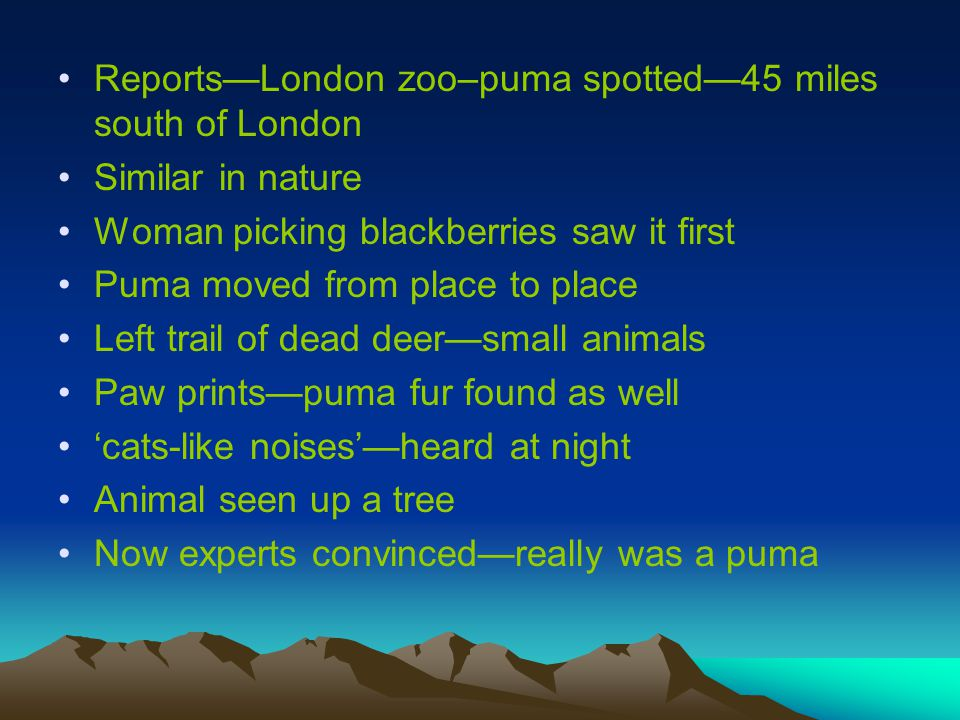 Reports—London zoo–puma spotted—45 miles south of London Similar in nature Woman picking blackberries saw it first Puma moved from place to place Left