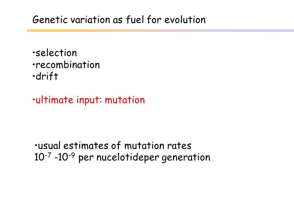 Detection of mosaics using 2 hypervariable microsats site Kolaviken, Archipelago Sea, Finnland mosaic genotype normal bi-allelic genotype mosaic genotype normal bi-allelic genotype locus GA17H locus 35