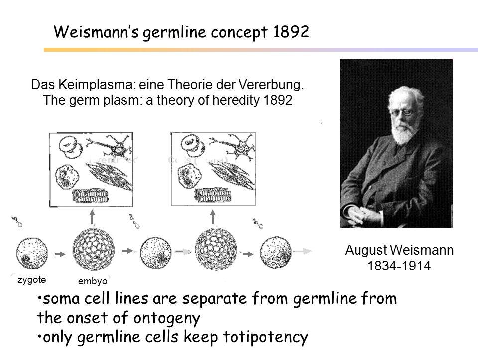 spatial arrangement of meristematic tissues... Variegated Pelargonium...determines type of mosaic
