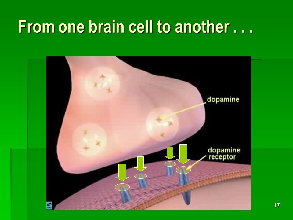 16 Reception Reception of neurotransmitters across the synaptic cleft (i.e., the space between nerve cells) can be likened to water going down the drain...