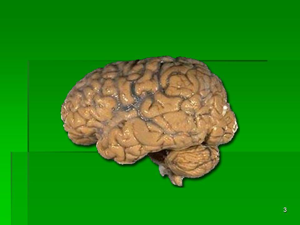 2 The Complex Human Brain