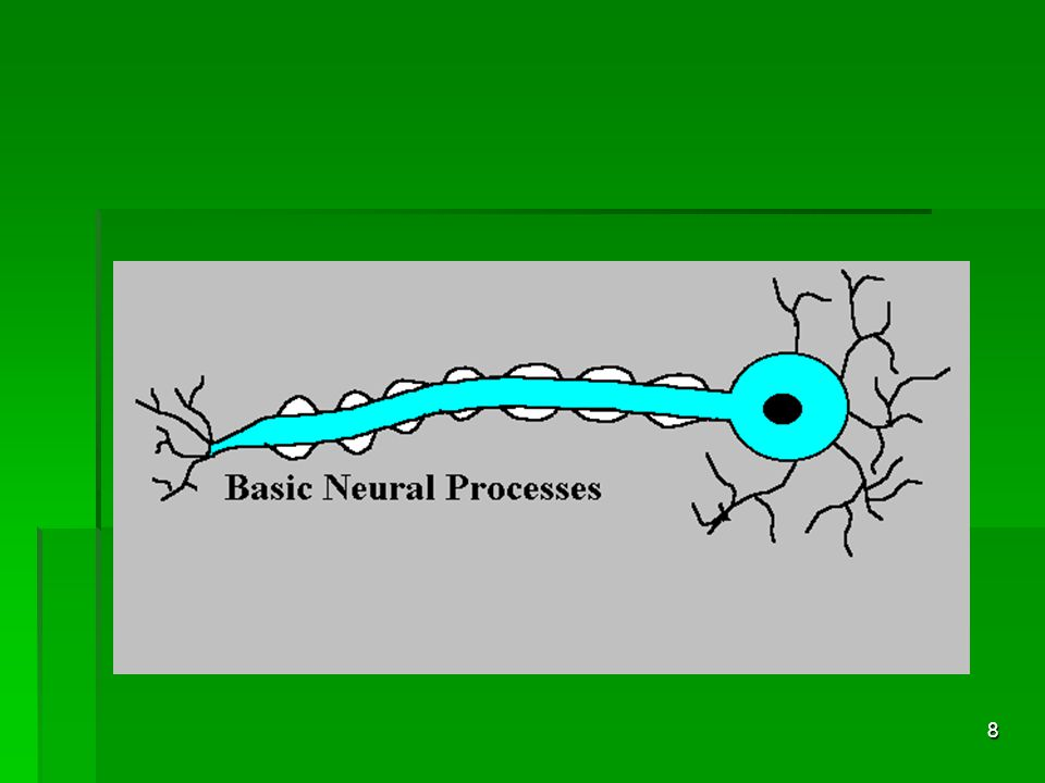 7 Individual Brain Cell (neuron)