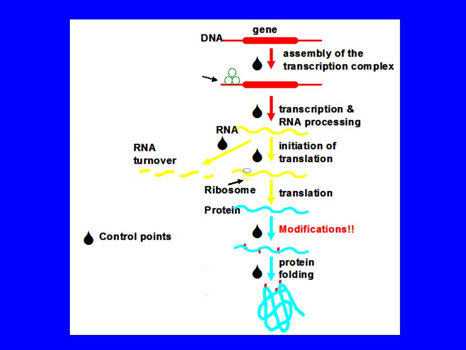 Replication: Semi-conservative Preserving and propagating the cellular message Replication begins at a predetermined site, the origin of replication in a bidirectional mode.