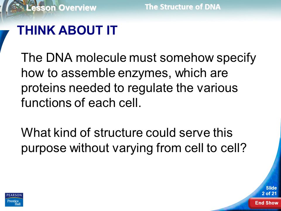 End Show Slide 13 of 21 Copyright Pearson Prentice Hall The Components and Structure of DNA The Double Helix The clues in Franklin's X-ray pattern enabled Watson and Crick to build a model that explained the specific structure and properties of DNA.