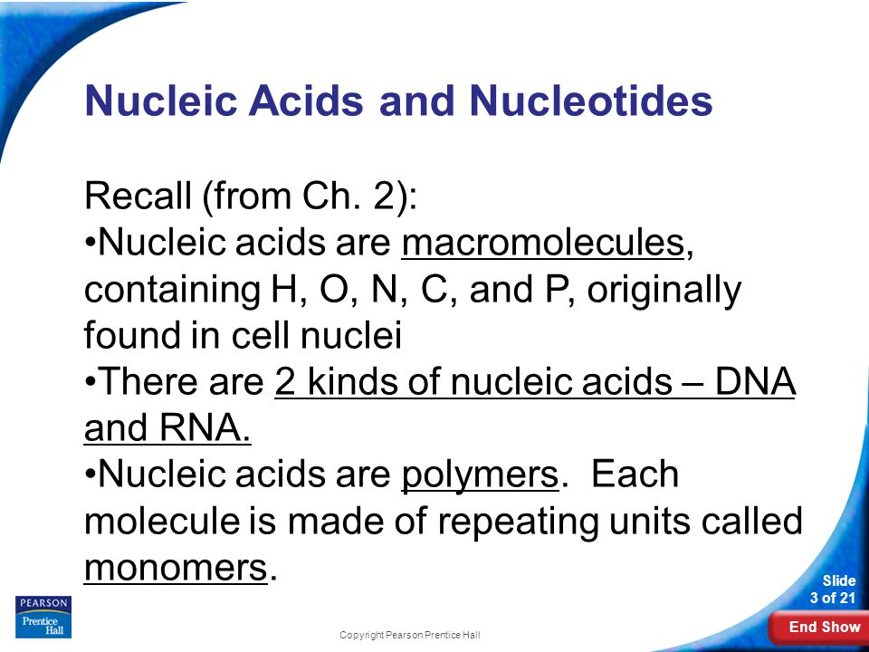 End Show Slide 4 of 21 Copyright Pearson Prentice Hall The Components and Structure of DNA The monomer that makes up a nucleic acid molecule is called a nucleotide.