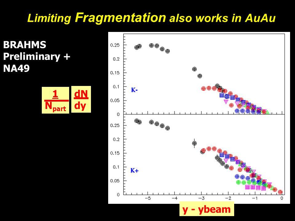 Michael Murray14 Limiting Fragmentation also works in AuAu BRAHMS Preliminary + NA49 dN dy 1 N part y - ybeam