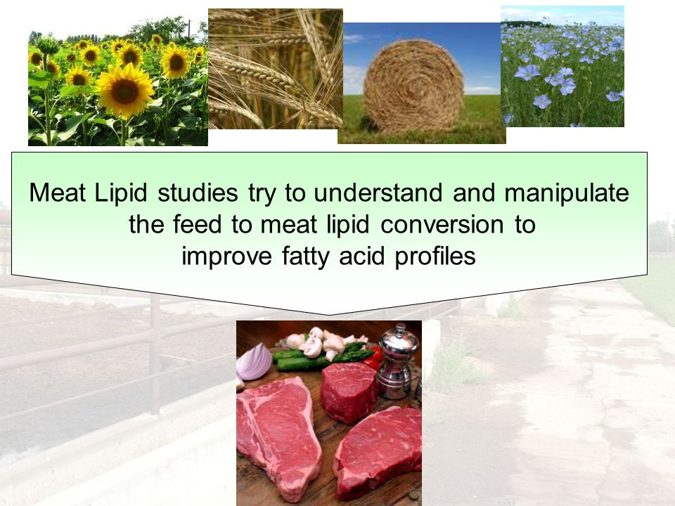 Meat Lipid studies try to understand and manipulate the feed to meat lipid conversion to improve fatty acid profiles