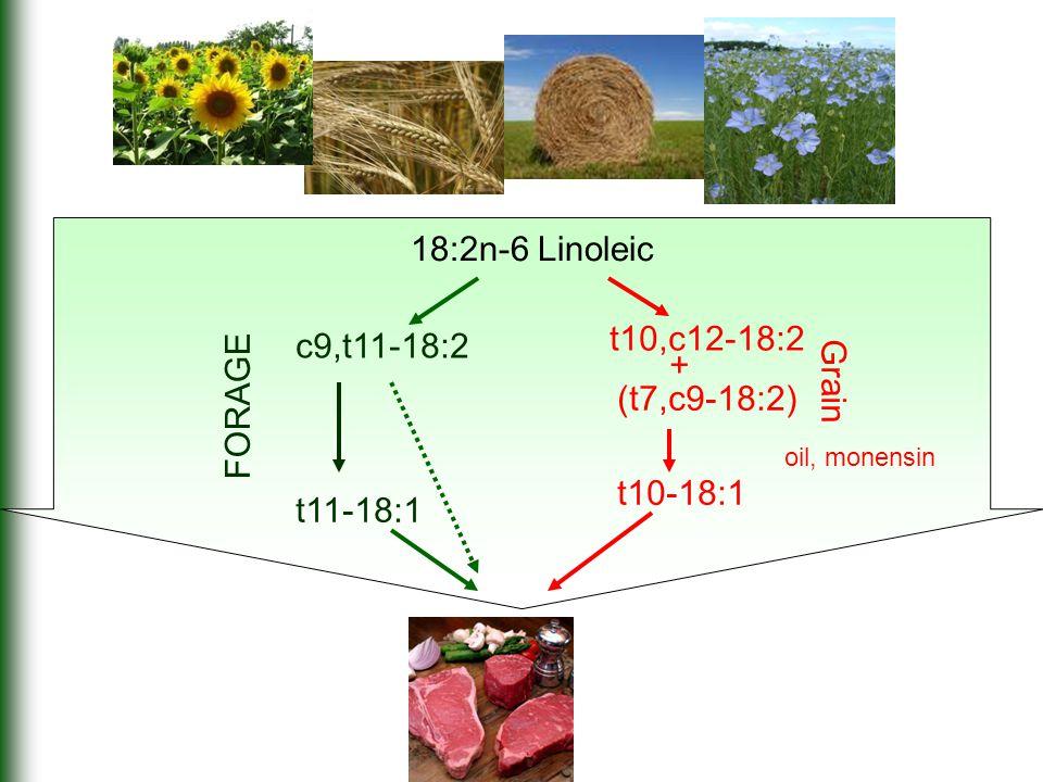 18:2n-6 Linoleic t10,c12-18:2 t10-18:1 (t7,c9-18:2) + Grain oil, monensin c9,t11-18:2 t11-18:1 FORAGE