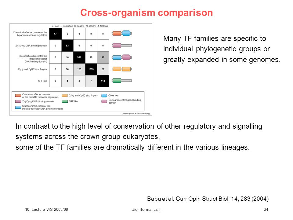 10. Lecture WS 2008/09Bioinformatics III34 Cross-organism comparison Many TF families are specific to individual phylogenetic groups or greatly expand