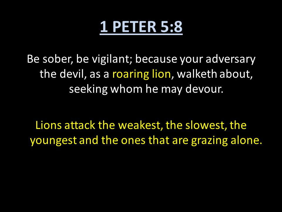1 PETER 5:8 Be sober, be vigilant; because your adversary the devil, as a roaring lion, walketh about, seeking whom he may devour. Lions attack the we