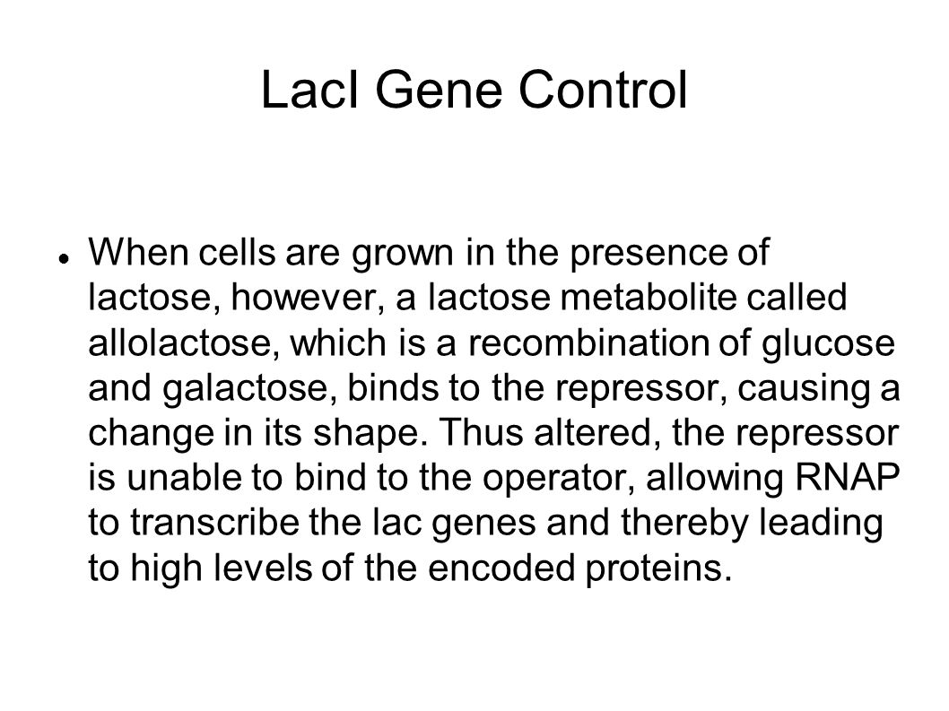LacI Gene Control When cells are grown in the presence of lactose, however, a lactose metabolite called allolactose, which is a recombination of glucose and galactose, binds to the repressor, causing a change in its shape.