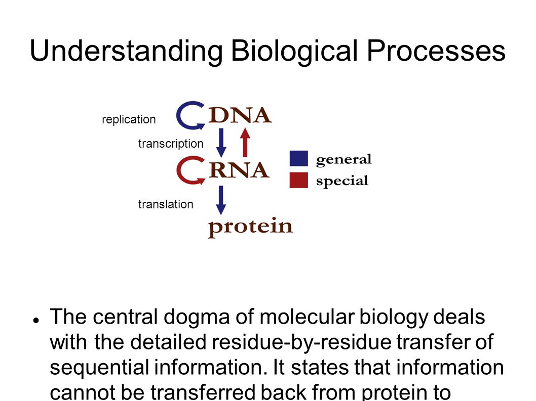 Understanding Biological Processes The central dogma of molecular biology deals with the detailed residue-by-residue transfer of sequential information.