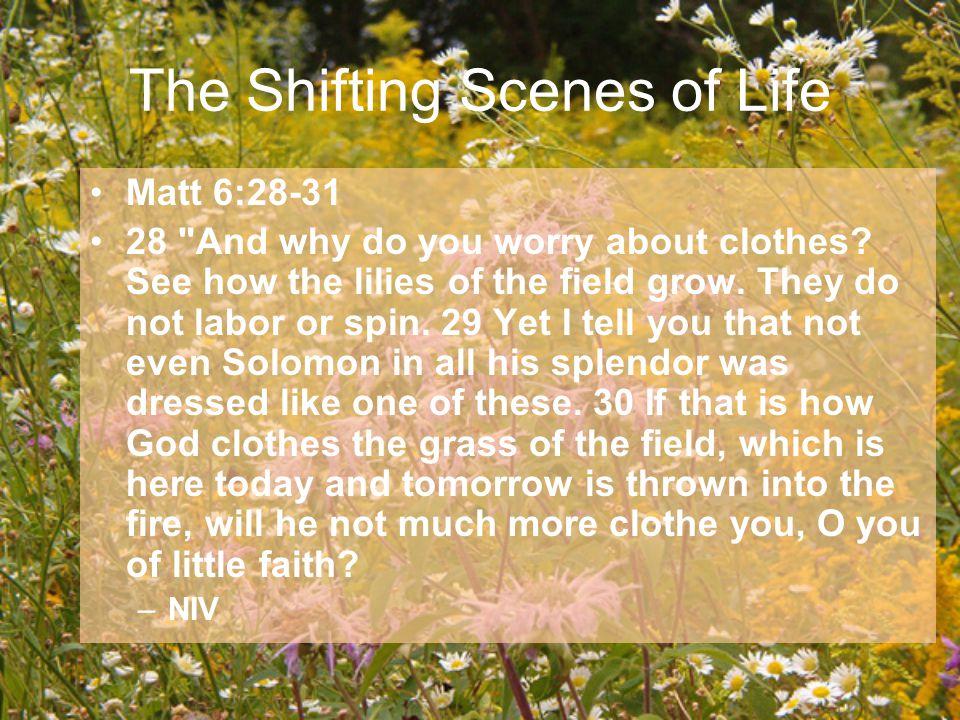Matt 6:28-31 28