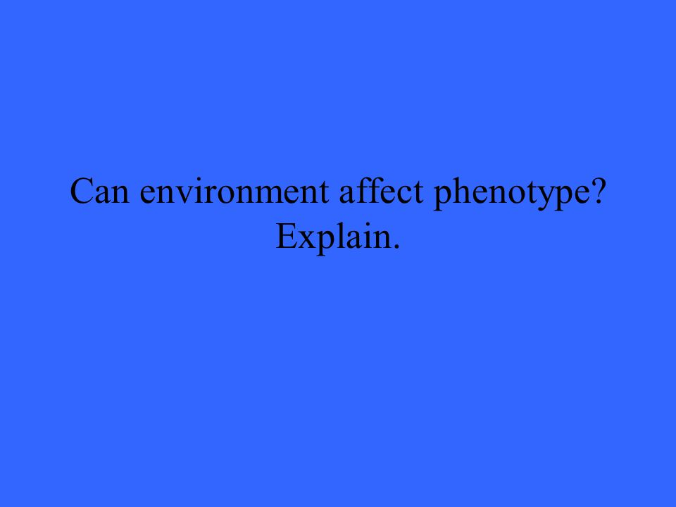 Can environment affect phenotype? Explain.