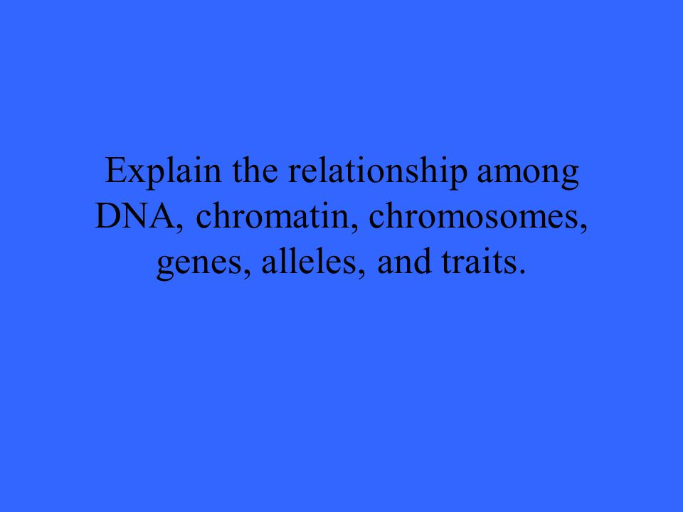Explain the relationship among DNA, chromatin, chromosomes, genes, alleles, and traits.