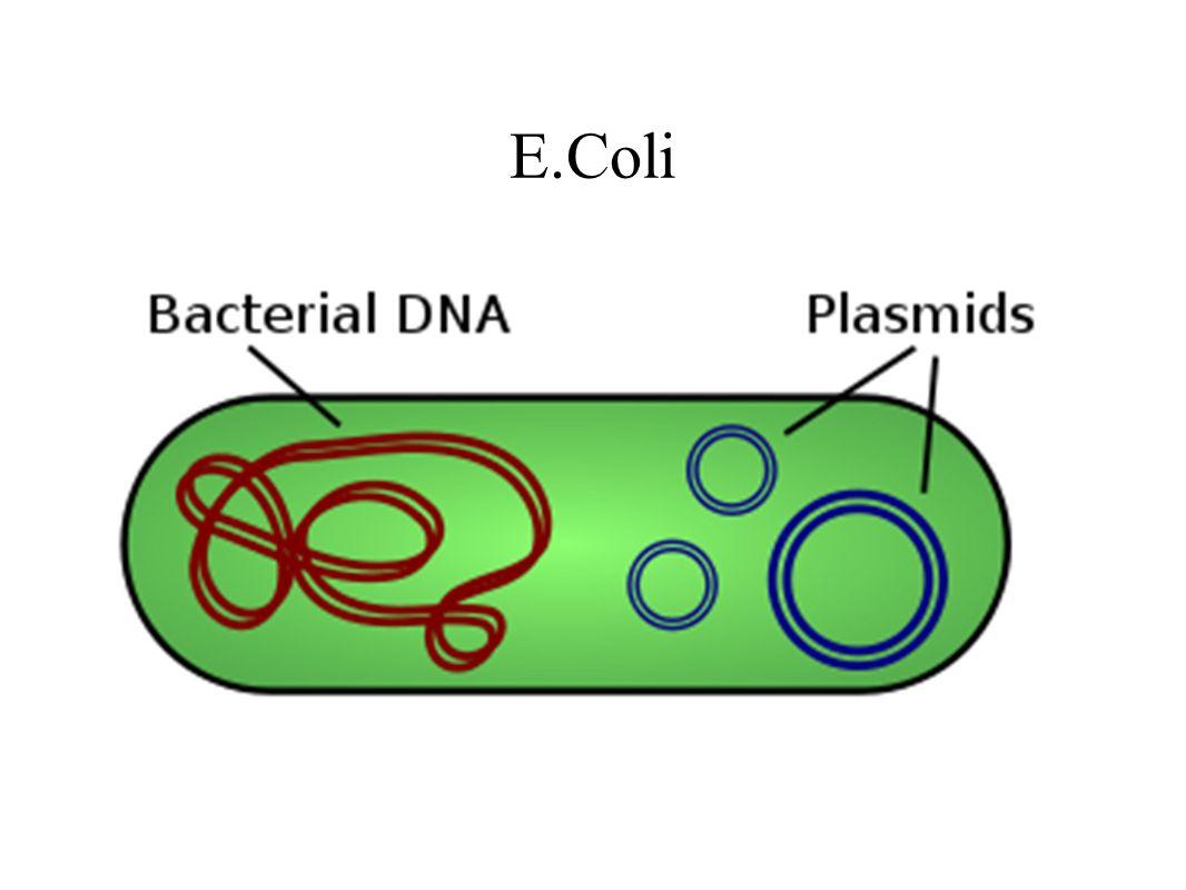 Plasmid DNAPlasmid DNA + gene How might we cut open the plasmid to get the gene in.