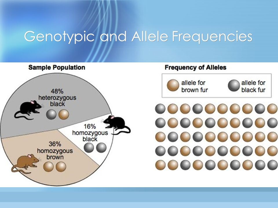 Genotypic and Allele Frequencies