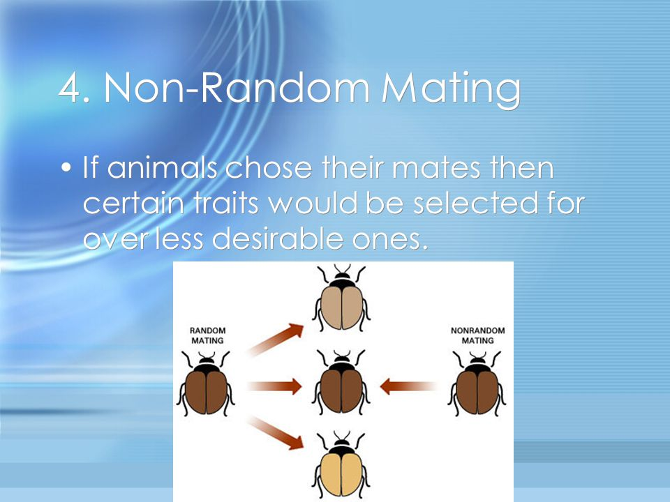 4. Non-Random Mating If animals chose their mates then certain traits would be selected for over less desirable ones.