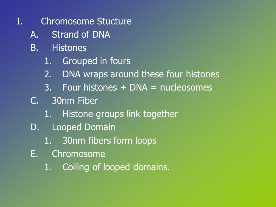 I.Chromosome Stucture A.Strand of DNA B.Histones 1.Grouped in fours 2.DNA wraps around these four histones 3.Four histones + DNA = nucleosomes C.30nm Fiber 1.Histone groups link together D.Looped Domain 1.30nm fibers form loops E.Chromosome 1.Coiling of looped domains.