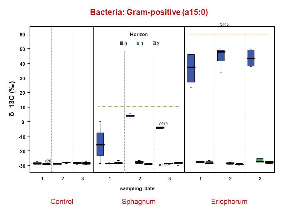 Bacteria: Gram-positive (a15:0) ControlSphagnumEriophorum -30 -20 -10 0 10 20 30 40 50 60 δ 13C (‰) 123123 sampling date 123 Horizon 012 145 179 186 20