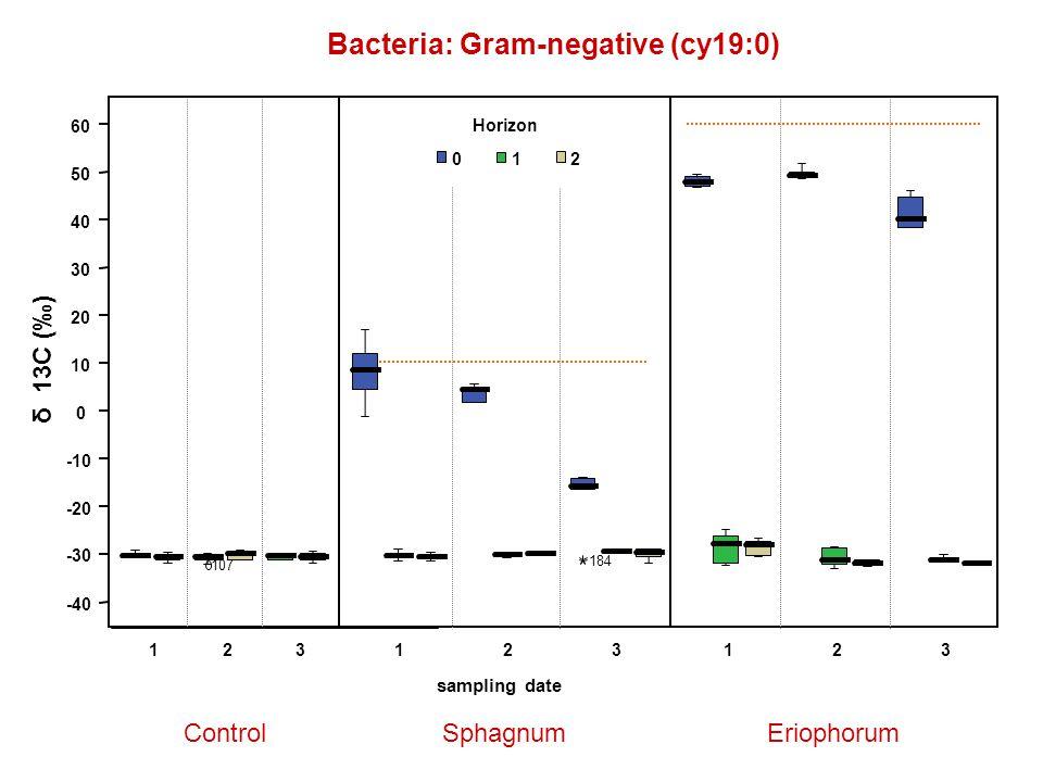 Bacteria: Gram-negative (cy19:0) ControlSphagnumEriophorum δ 13C (‰) 123123 sampling date 123 Horizon 012 -40 -30 -20 -10 0 10 20 30 40 50 60 107 184