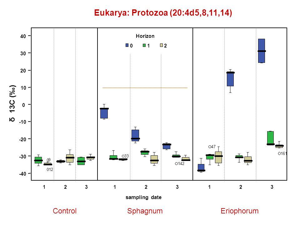 Eukarya: Protozoa (20:4d5,8,11,14) ControlSphagnumEriophorum δ 13C (‰) 123123 sampling date 123 Horizon 012 47 161 142 33 -40 -30 -20 -10 0 10 20 30 40 12 9