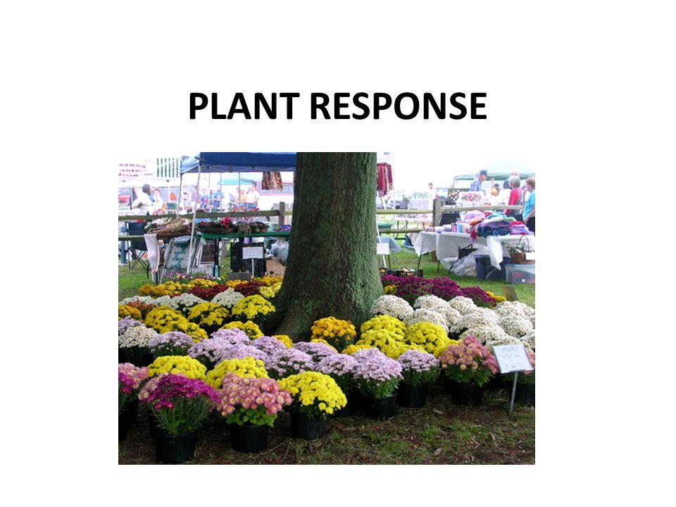 PLANT RESPONSE
