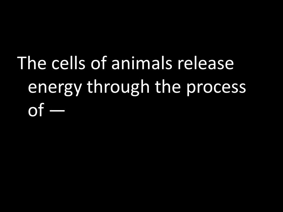 The cells of animals release energy through the process of —