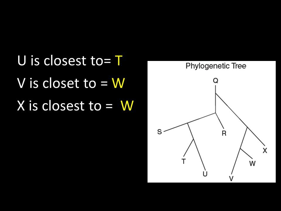 U is closest to= T V is closet to = W X is closest to = W