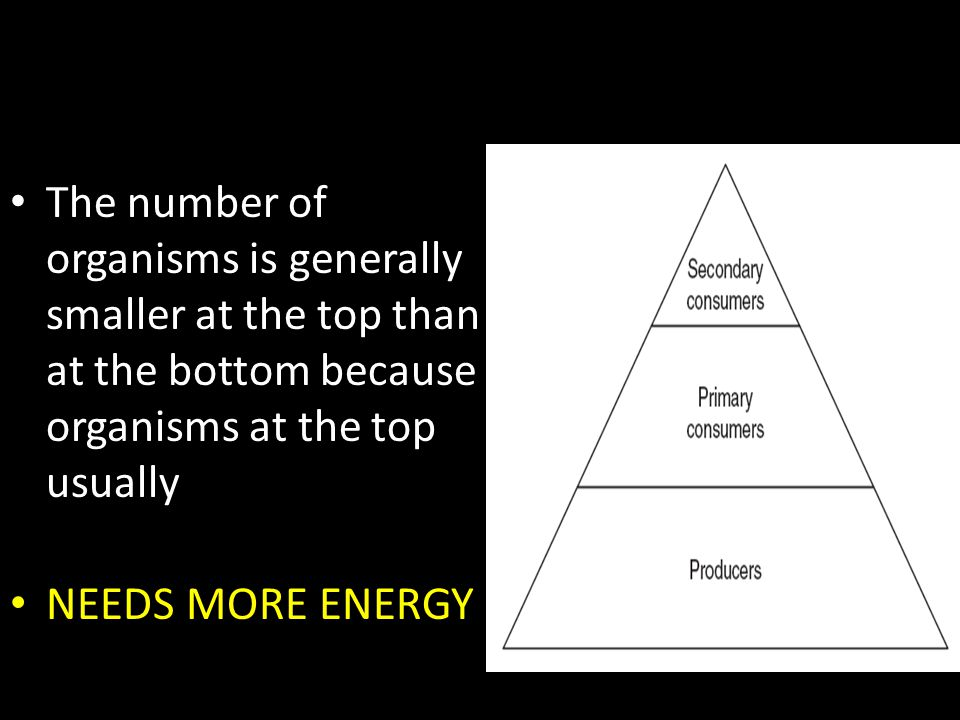 The number of organisms is generally smaller at the top than at the bottom because organisms at the top usually NEEDS MORE ENERGY