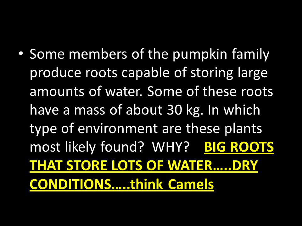 Some members of the pumpkin family produce roots capable of storing large amounts of water. Some of these roots have a mass of about 30 kg. In which t