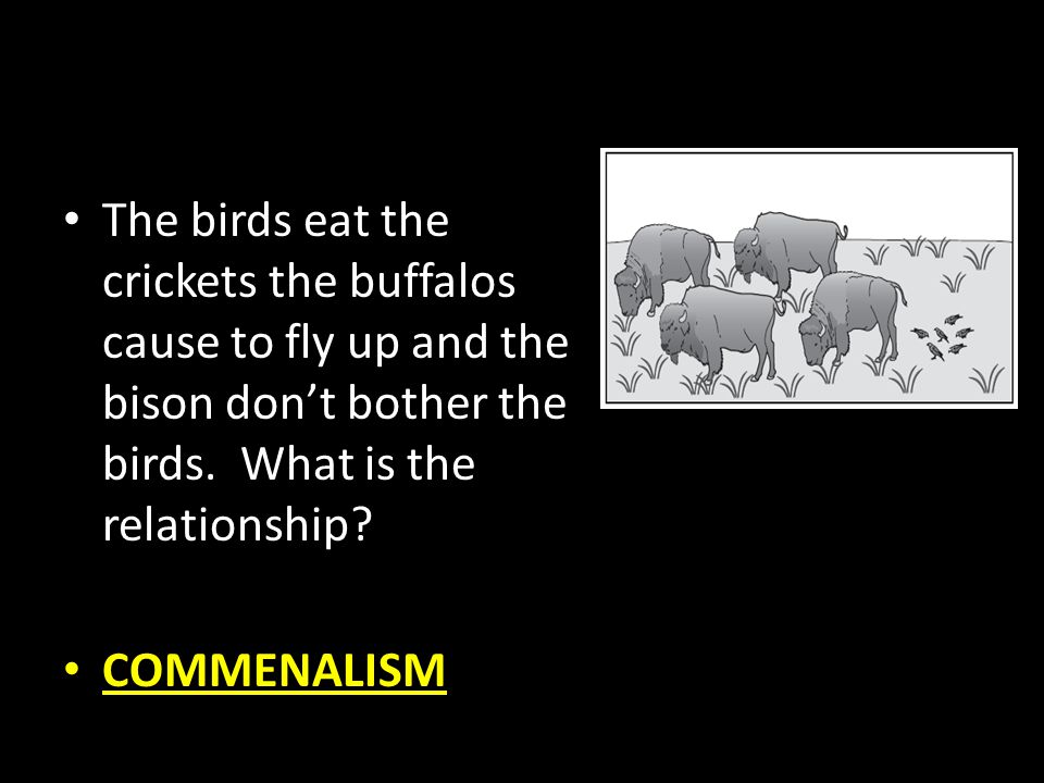 COMMENALISM