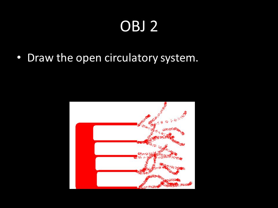 OBJ 2 Draw the open circulatory system.