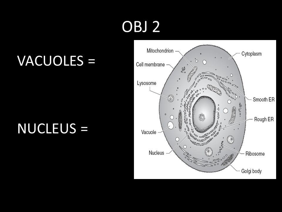 OBJ 2 VACUOLES = NUCLEUS =