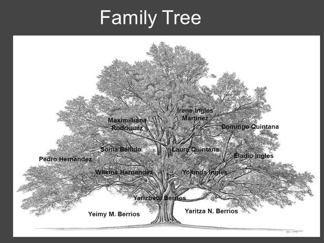 Family Tree Yarizbeth Berrios Wilkins HernandezYolanda Ingles Pedro Hernandez Sonia Bellido Maximilliana Rodriguez Laura Quintana Yeimy M.